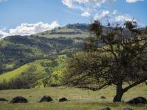 Prados verdes en las montañas con los robles Imagen de archivo libre de regalías