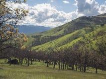 Prados verdes en las montañas con los robles Fotos de archivo