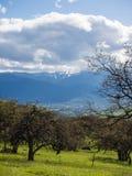 Prados verdes en las montañas con los robles Foto de archivo