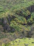 Prados verdes en las montañas con los robles Fotografía de archivo