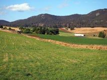 Prados verdes en las tierras de labrantío primeras, Tasmania Fotos de archivo libres de regalías