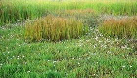 Prados verdes, hierba verde Foto de archivo libre de regalías