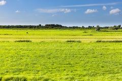 Prados verdes y un cielo azul Foto de archivo libre de regalías
