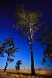 Prados y árboles Fotos de archivo