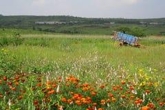 Prados y flores en la India rural escénica Foto de archivo libre de regalías