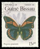 Praeneste Prepona бабочки Стоковая Фотография RF