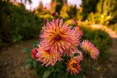 Prag-Herbst im botanischen Garten lizenzfreie stockbilder
