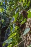 Prag-Regenwald im Zoo lizenzfreies stockbild