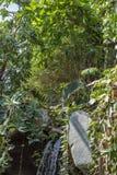 Prag-Regenwald im Zoo stockfoto