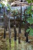 Prag-Regenwald im Zoo lizenzfreie stockbilder