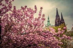 Prag-Schloss mit St. Vitus Cathedral, Hradcany, Tschechische Republik, wie vom Frühling gesehen arbeitet im Garten Stockbild