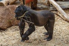 Prag-Zoogorillaausstellung lizenzfreies stockfoto