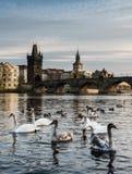 Praga, Charlesbridge con gli uccelli fotografie stock libere da diritti