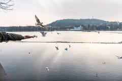 PRAGA, CHECO - 14 DE MARZO DE 2016: La gente está alimentando la gaviota y la paloma en costa del río de Vltana en Praga, checa Imagenes de archivo
