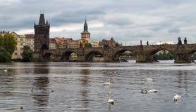 praga Immagine di Charles Bridge a Praga con i cigni nella priorità alta Fotografia Stock Libera da Diritti