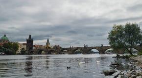 praga Immagine di Charles Bridge a Praga con i cigni nella priorità alta Fotografia Stock