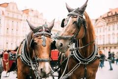 Praga, República Checa Dos caballos en el cuadrado pasado de moda de At Old Town del coche imagenes de archivo