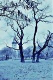 Praga, repubblica Ceca, gennaio 2015 Vista del parco di Praga nei colori grigio-blu nella sera nell'inverno fotografie stock libere da diritti