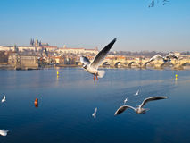 Praga tourist image Stock Images
