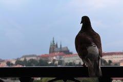 Prague besökare royaltyfri foto