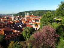 Prague in bloom Royalty Free Stock Images