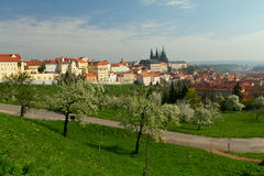 Prague castle. In the spring with blooming apple trees in foreground Stock Photography