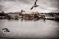 Prague castle with birds Stock Photos