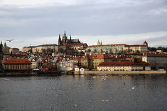 Prague Castle (Czech: Pražský hrad) is the official residence and office of the President of the Czech Republic. A picture of the Prague Castle (Czech: Pra royalty free stock photography