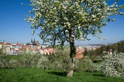 Prague castle from Petrin, Prague, Czech republic. Prague castle and Mala Strana from Seminarska Garden in Prague, Czech republic Stock Photo
