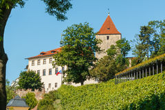 Prague castle in the middle of green vineyard royalty free stock photo