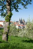 Prague castle from Petrin, Prague, Czech republic. Prague castle and Mala Strana from Seminarska Garden in Prague, Czech republic Stock Image