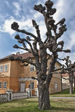 Prague Castle. Royal Garden. Royal Garden in spring. Horse chestnut tree. The garden was created in 1535 for Ferdinand I. Its appearance has been altered over Stock Photo