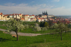 Prague castle in spring. View of Prague Castle (blooming apple tree in the foreground Royalty Free Stock Images
