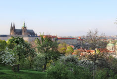 Prague Castle and trees in bloom, Czech Republic Stock Photography