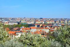 Prague with cherry trees Royalty Free Stock Images