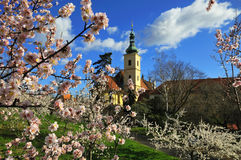 Prague Church in Springtime. Church of Our Lady Victorious in Prague, Czech Republic from blossoming Cherry Orchard in Spring Stock Images