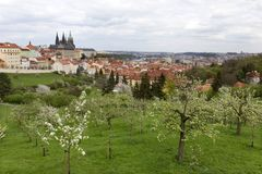 Spring Prague City with gothic Castle and the green Nature and flowering Trees, Czech Republic Royalty Free Stock Photos