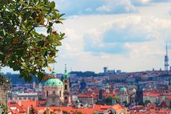 Prague cityscape view through branches with berries. City`s urban density of buildings, churches and towers. Prague, Czech Republic stock images