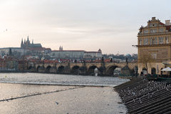 PRAGUE, CZECH - MARCH 14, 2016: Flying Seagull and Dove on Vltana River Coast in Prague, Czech. Old Town Water Tower and Charles K Stock Image