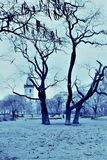 Prague, Czech Republic, January 2015. View of the Prague Park in gray-blue colors in the evening in winter. royalty free stock photos