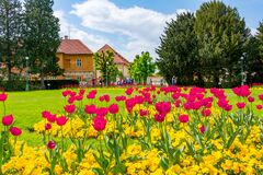 Free Prague, Czech Republic - May 2019: Spring Flowers In Royal Garden Near Prague Castle Royalty Free Stock Photography - 180978157