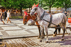 PRAGUE, CZECH REPUBLIC-SEPTEMBER 12, 2015 Horses with coach in. Prague on street, people, cetral part of the Czech capital. Czech Republic Royalty Free Stock Image