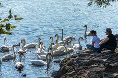 Prague, Czech Republic - September 10, 2019: people watch swans in Prague on the river next to the Charles Bridge royalty free stock photography