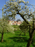 Prague gothic Castle with flowering trees Royalty Free Stock Photography