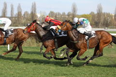 Prague horse racing - office depot race. 86th Gomba handicap, Grand Prix AUTO HASE - Nazgul horse led by the jockey Jaromir Safar and I tak se da horse led by Royalty Free Stock Images