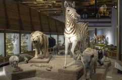 Prague Museum - Noah's Ark. Taxidermy of different animals in Prague national museum , exhibition Noah's Ark Stock Images