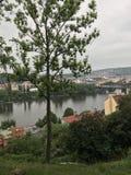 Prague natur i sommar, träd och flodstrandhus royaltyfri foto