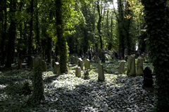 Prague - New Jewish Cemetery Stock Photos