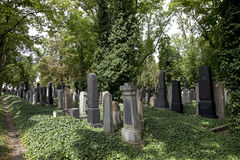 Prague - New Jewish Cemetery Royalty Free Stock Image