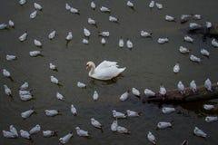 Prague, République Tchèque - la rivière de Vltava photos libres de droits